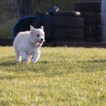 Puppy loopt naar baasje