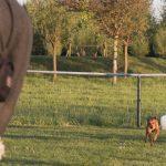 Hond loopt naar zijn baasje