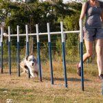 Hond loopt door paaltjes