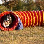 Hond loopt door de tunnel