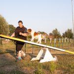 Hond loopt over wip