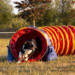 hond loopt door tunnel