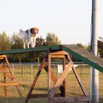 Hond loopt over de brug